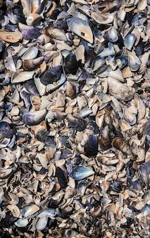 黒海ルーマニアからの色とりどりの貝殻。夏の背景