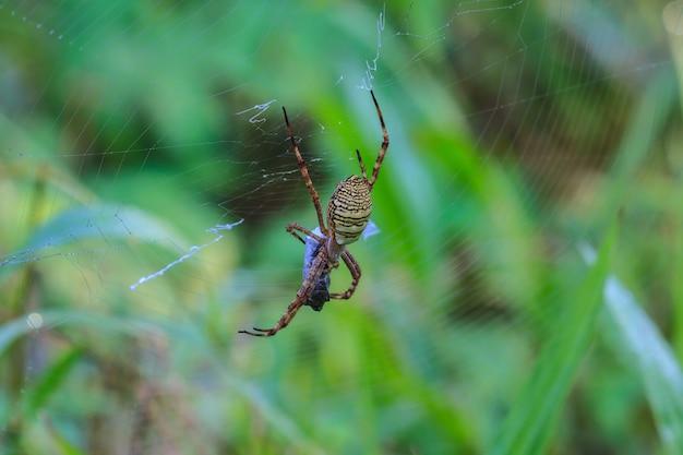 Multicolored spider with prey