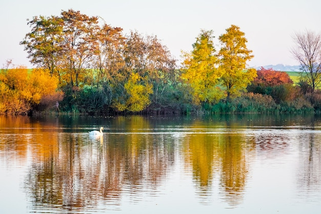 秋の透明な川の水に色とりどりの木々が飾られています