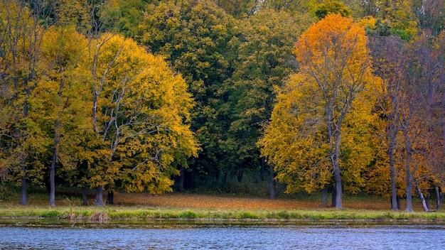 川の近くの秋の森の色とりどりの木