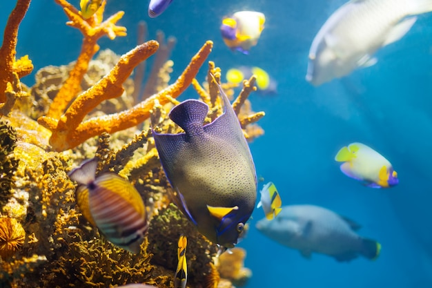 Разноцветные тропические рыбы на коралловых