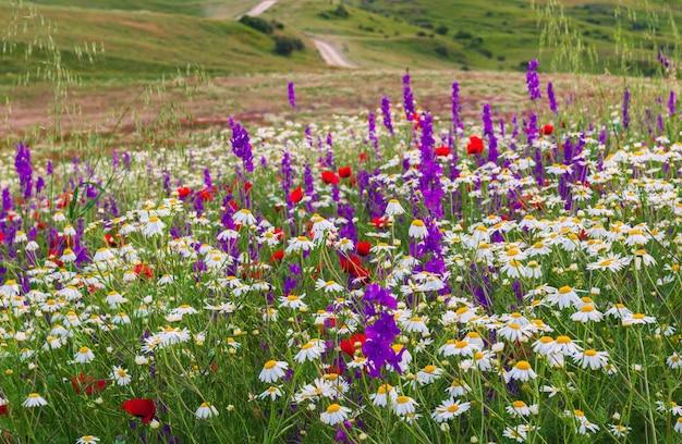 高原の牧草地の色とりどりの野花