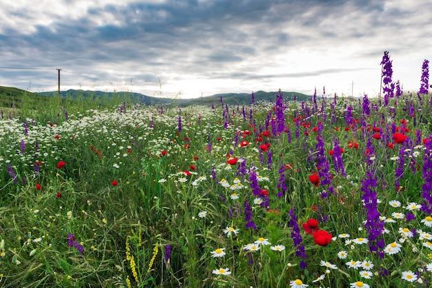 牧草地の色とりどりの野花