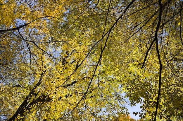 色とりどりの黄黄色の葉