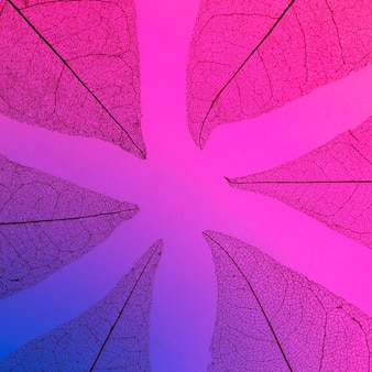 Texture di foglie traslucide colorate multiple
