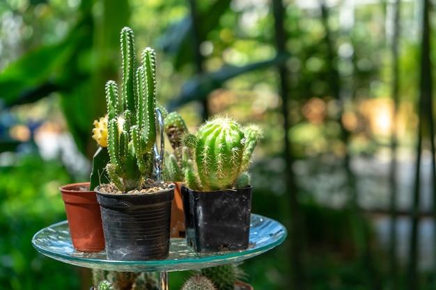 정원에서 과일 라인 뷔페의 디저트 접시에 여러 개의 결합된 선인장 장식