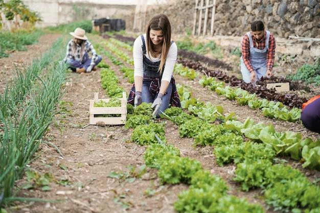 상추 식물을 줍는 동안 일하는 다민족 사람들
