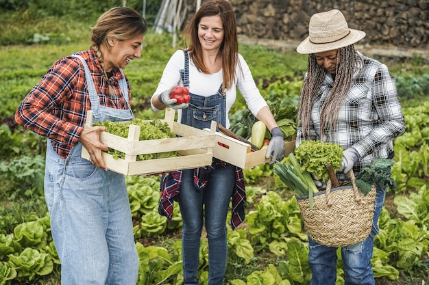 Multiracial women working at garden picking up organic lettuce