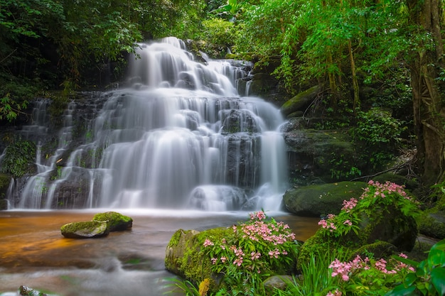 Mun dang waterfall with a pink flower foreground in rain forest