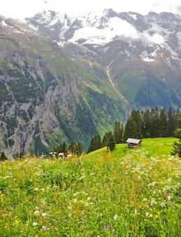 Murren landscape view, mountain cottage with lauterbrunnen valley background, switzerland