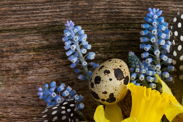Muscari and  daffodil  flowers with feathers and eggs