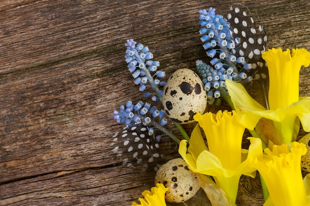 Muscari and  daffodil fresh flowers with quail  feathers and eggs