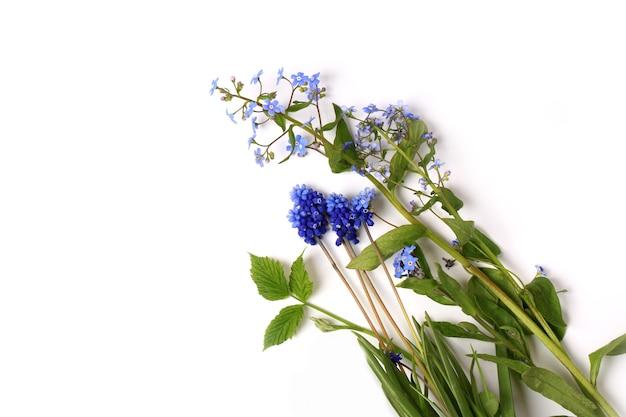 흰색 배경에 고립 된 muscari 봄 구성