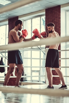 Muscular boxers with bare torsos are practicing fight.
