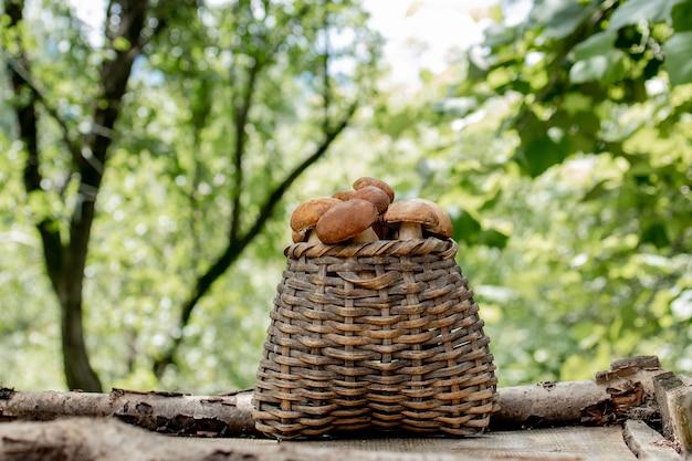 Подберезовики на деревянных фоне. осенние белые грибы