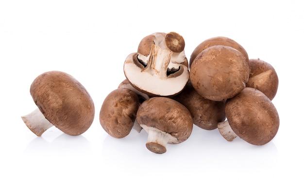 Mushroom champignon isolated