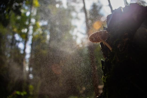 비 생태 환경 동안 숲의 그루터기에 버섯 근접 촬영