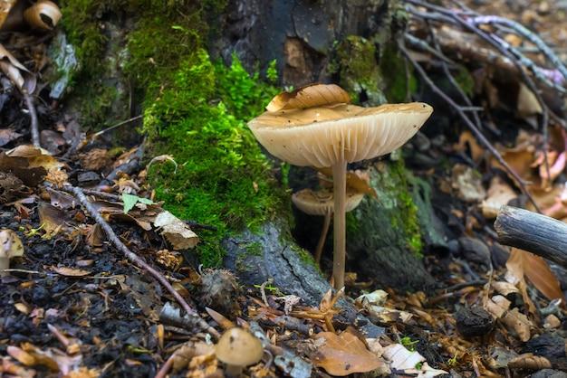 젖은 숲의 버섯