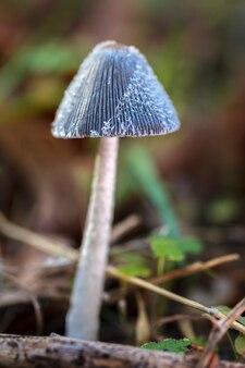숲 바닥에 버섯