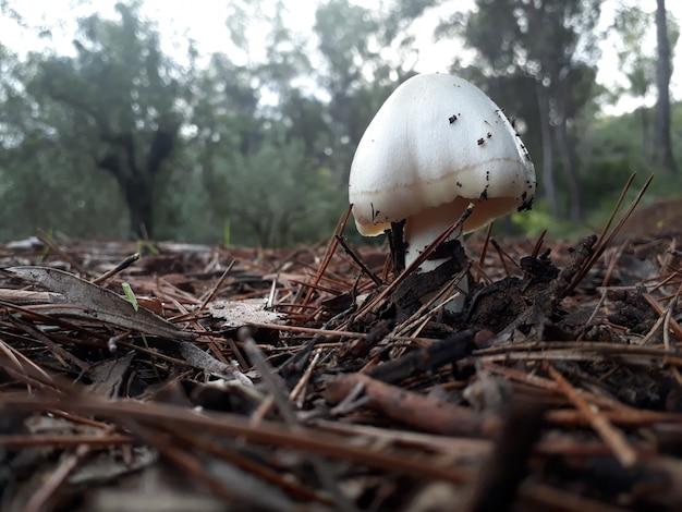 秋の森の湿気の中で成長するキノコとブーレタス
