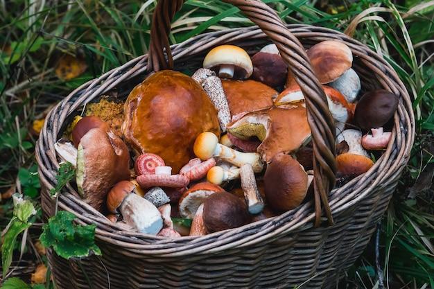 Mushrooms on basket