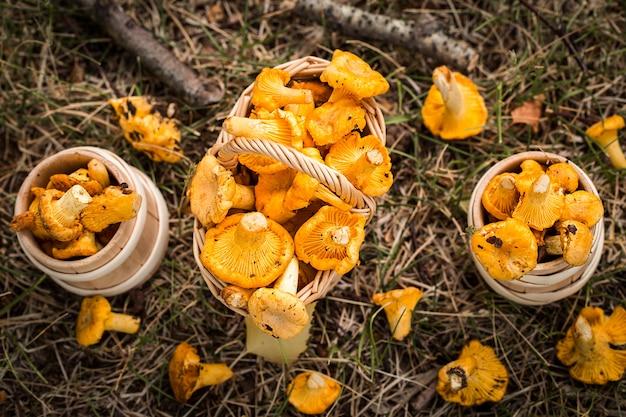 Грибы лисички в корзине на траве
