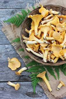 Mushrooms chanterelles in a basket and a fern leaf on the table, top view.