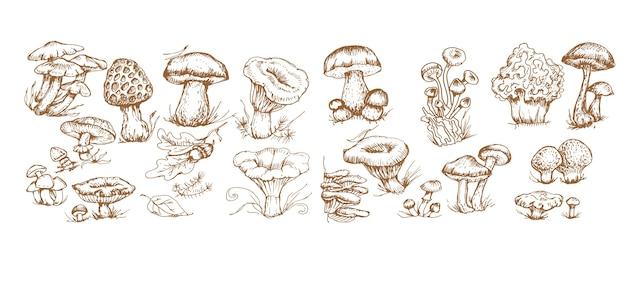 Mushrooms  graphics hand drawn print textile illustration background set patern seamless coloring