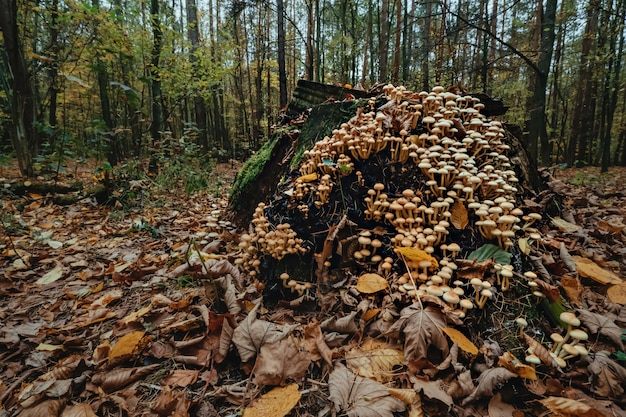 Mushrooms growing from a decaying tree stump in forest