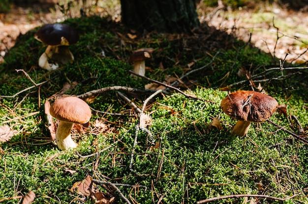 森の草に生えているキノコ
