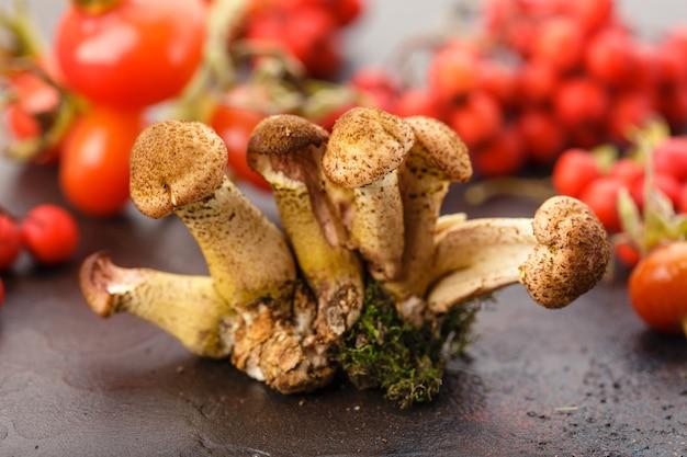 Mushrooms honey agarics