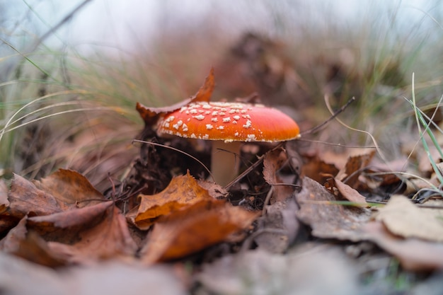 秋の森のキノコ