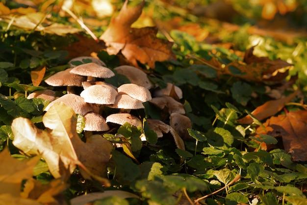 Грибы в лесу под листьями