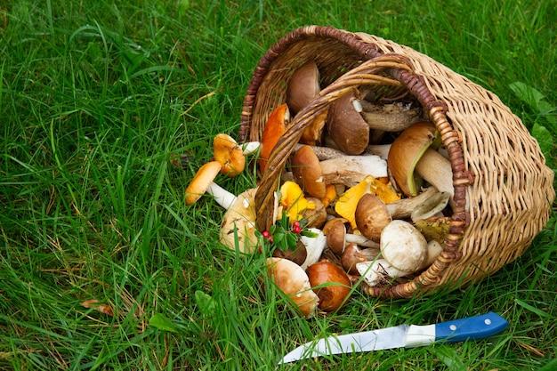 柳のバスケットのキノコと柔らかい緑の草のナイフ
