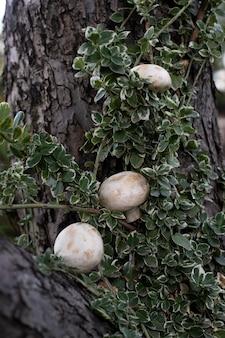 緑のある木の空間にキノコ