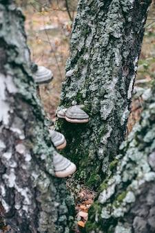 가 숲에서 나무에 버섯