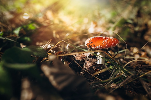 Mushrooms in the woods.