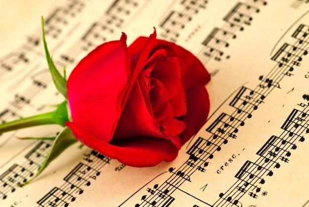 Музыкальные ноты и красная роза. селективный фокус, неглубокая глубина резкости.