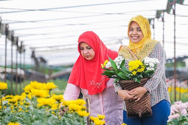 イスラム教徒の人々と庭の菊コレクション