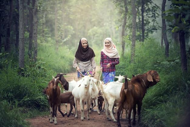Muslim women worker with goat in thailand