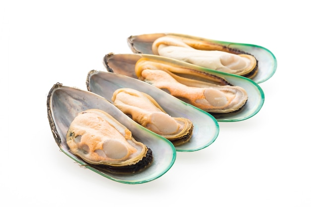 Mussel isolated