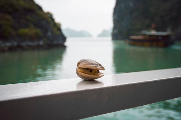 ベトナムのハロン湾の美しい風景を背景にしたムール貝。