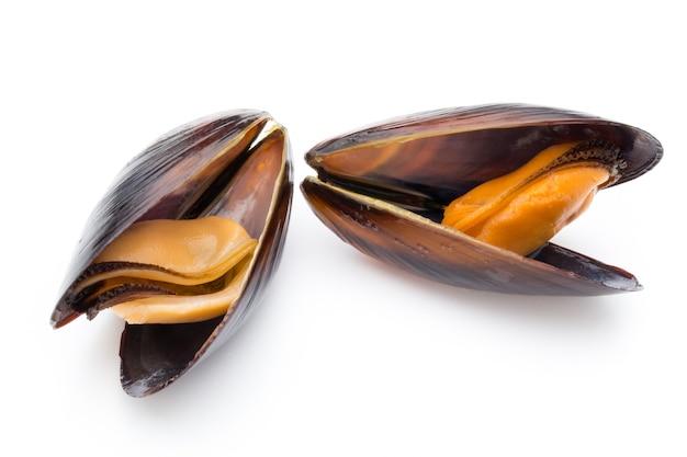 Мидии, изолированные на белом. морепродукты.