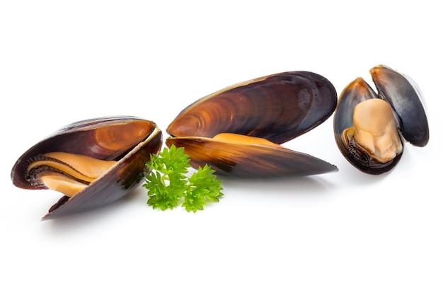 Мидии, изолированные на белой поверхности. морепродукты.