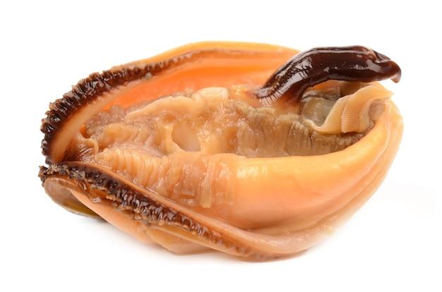 白い背景の上のムール貝