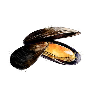 ムール貝、二枚貝の水彩画の隔離された図。