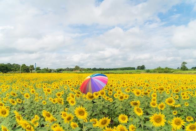 Muticolor umbrella in sunflower field.