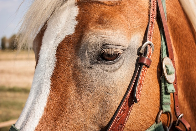 Muzzle of a horse in the foreground with details