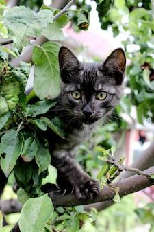 Морда котенка крупным планом