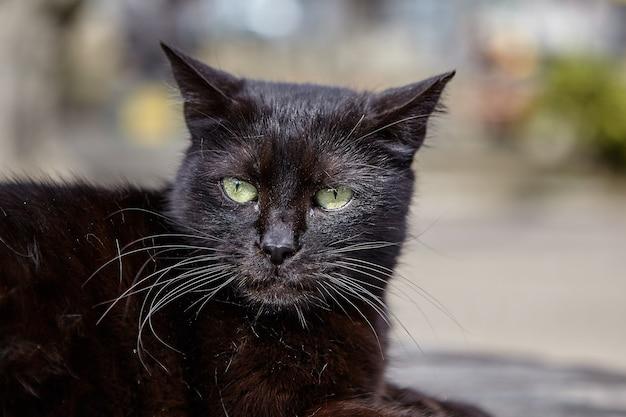 Морда черной бездомной кошки, отдыхающей в городском парке.